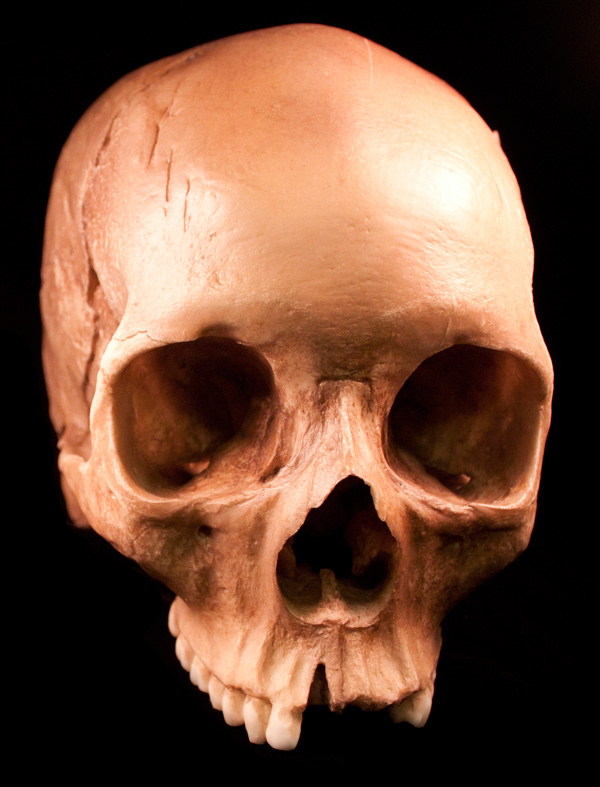 Human Skulls 54 Free Images Media Militia