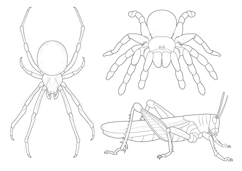 spider tarantula locust